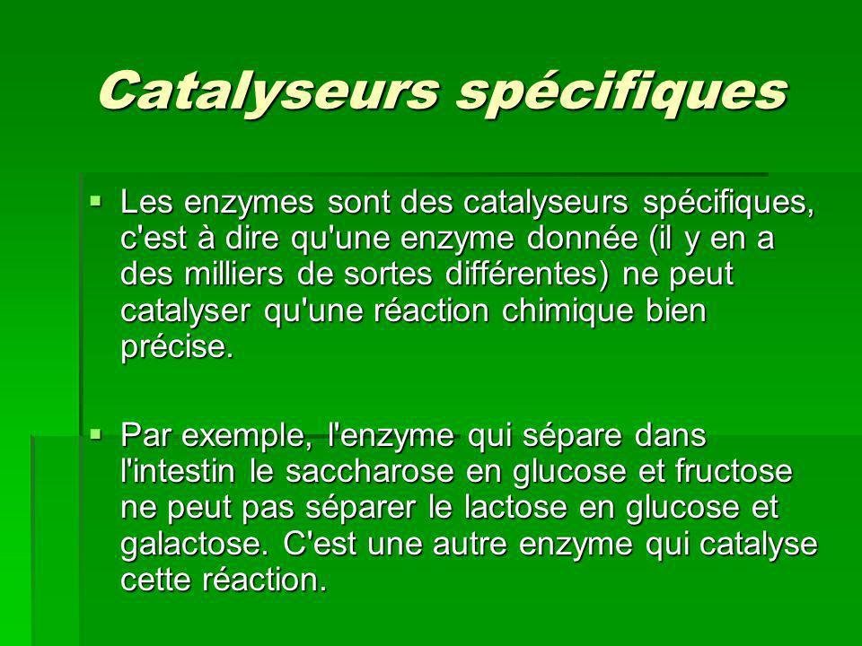 Catalyseurs spécifiques Les enzymes sont des catalyseurs spécifiques, c'est à dire qu'une enzyme donnée (il y en a des milliers de sortes différentes)