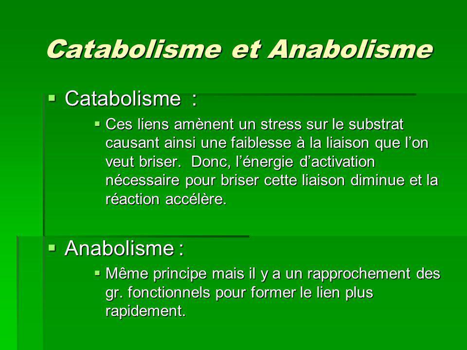 Catabolisme et Anabolisme Catabolisme : Catabolisme : Ces liens amènent un stress sur le substrat causant ainsi une faiblesse à la liaison que lon veu