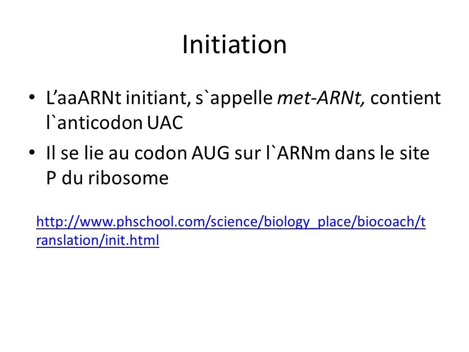 Initiation LaaARNt initiant, s`appelle met-ARNt, contient l`anticodon UAC Il se lie au codon AUG sur l`ARNm dans le site P du ribosome http://www.phsc