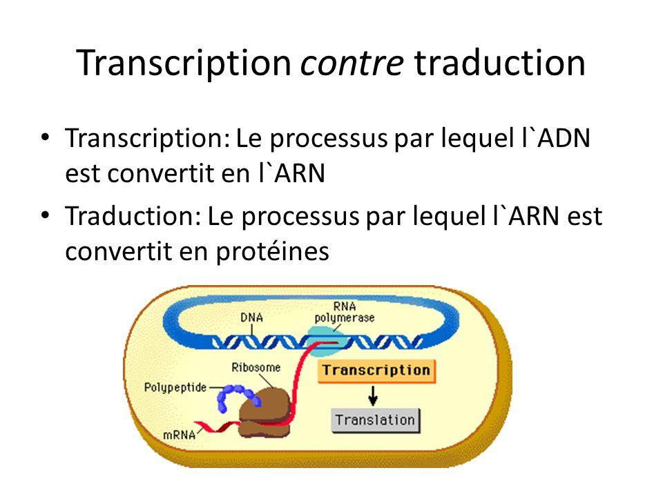 Transcription contre traduction Transcription: Le processus par lequel l`ADN est convertit en l`ARN Traduction: Le processus par lequel l`ARN est conv