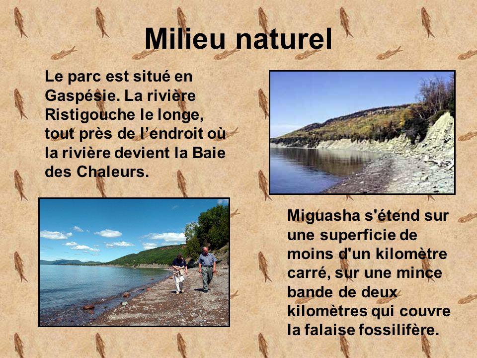 Milieu naturel Le parc est situé en Gaspésie.