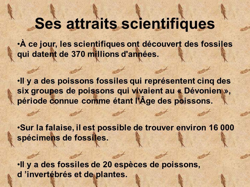 Ses attraits scientifiques À ce jour, les scientifiques ont découvert des fossiles qui datent de 370 millions d années.
