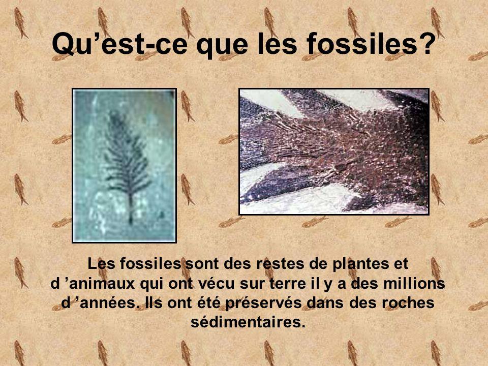 Quest-ce que les fossiles.