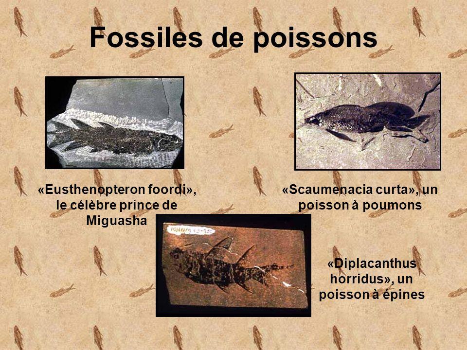 Fossiles de poissons «Eusthenopteron foordi», le célèbre prince de Miguasha «Scaumenacia curta», un poisson à poumons «Diplacanthus horridus», un poisson à épines