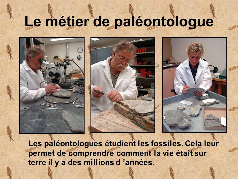 Le métier de paléontologue Les paléontologues étudient les fossiles.