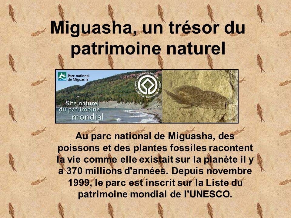 Au parc national de Miguasha, des poissons et des plantes fossiles racontent la vie comme elle existait sur la planète il y a 370 millions d années.