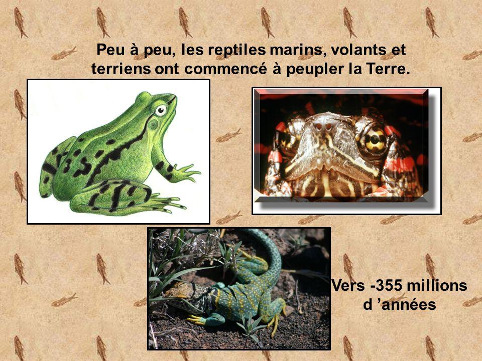 Peu à peu, les reptiles marins, volants et terriens ont commencé à peupler la Terre.