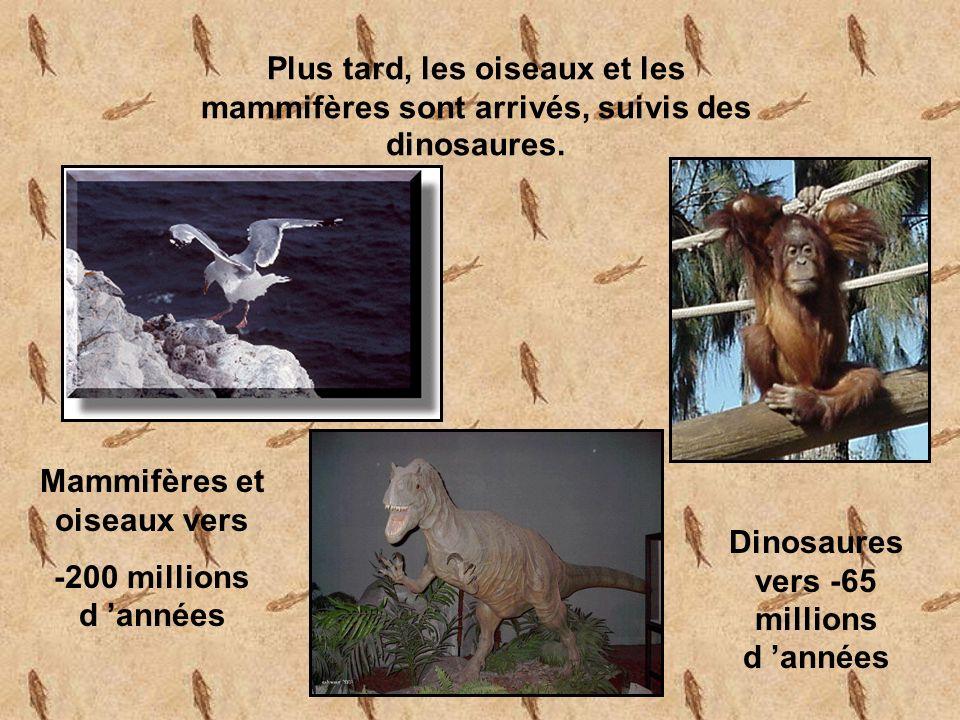 Plus tard, les oiseaux et les mammifères sont arrivés, suivis des dinosaures.