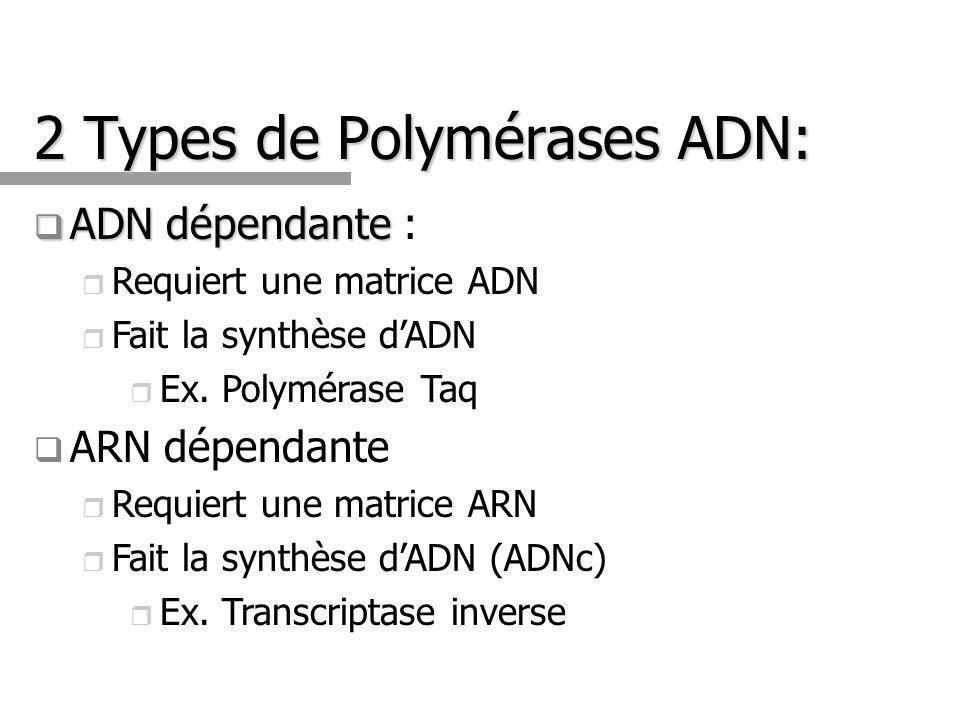 2 Types de Polymérases ADN: ADN dépendante ADN dépendante : Requiert une matrice ADN Fait la synthèse dADN Ex.