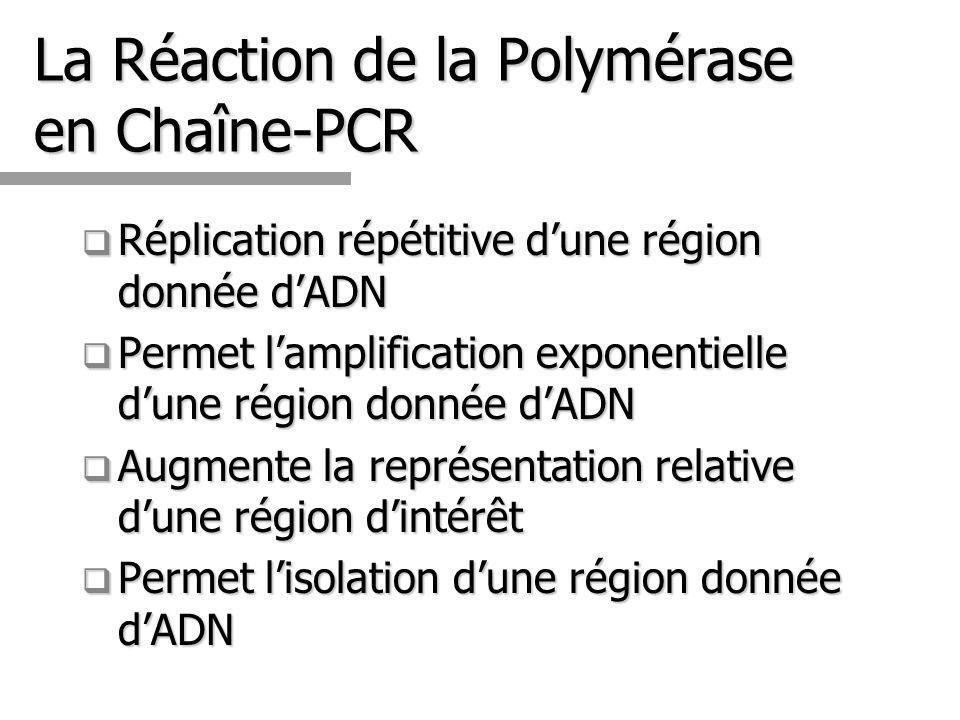 14 La Réaction de la Polymérase en Chaîne-PCR Réplication répétitive dune région donnée dADN Réplication répétitive dune région donnée dADN Permet lamplification exponentielle dune région donnée dADN Permet lamplification exponentielle dune région donnée dADN Augmente la représentation relative dune région dintérêt Augmente la représentation relative dune région dintérêt Permet lisolation dune région donnée dADN Permet lisolation dune région donnée dADN