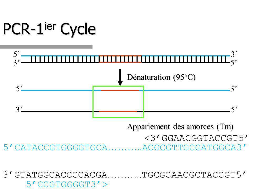PCR-1 ier Cycle 5 53 3 3 3 5 5 Dénaturation (95 o C) Appariement des amorces (Tm) 5CATACCGTGGGGTGCA ………..