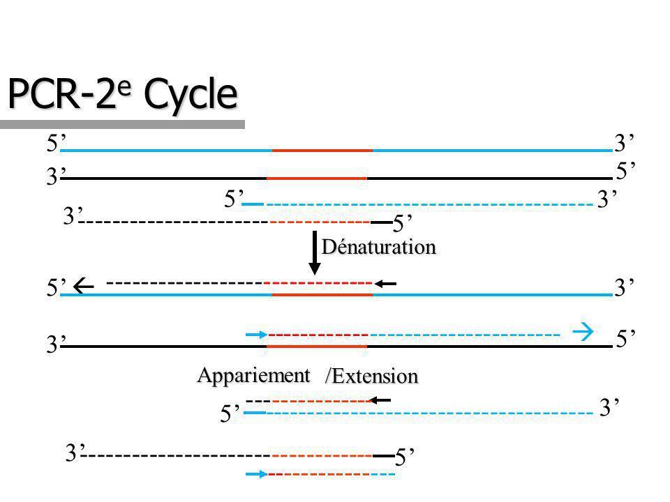 PCR-2 e Cycle 35 3 5 ---------------------------------- -------------------------------------- 5 3 5 3 Appariement ---------------- ---------------------------------- ------------------------------- 3 3 35 3 5 ---------------------------------- -------------------------------------- 5 5 Dénaturation --------------- /Extension