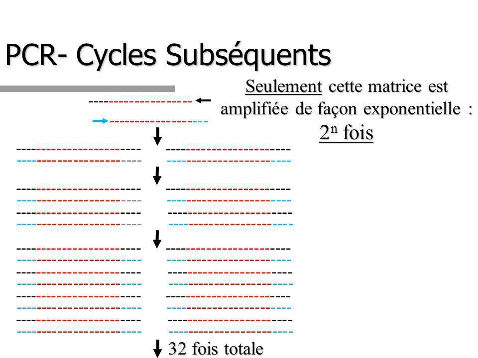 PCR- Cycles Subséquents -------------------- ------------------- Seulement cette matrice est amplifiée de façon exponentielle : 2 n fois ------------------------ 32 fois totale