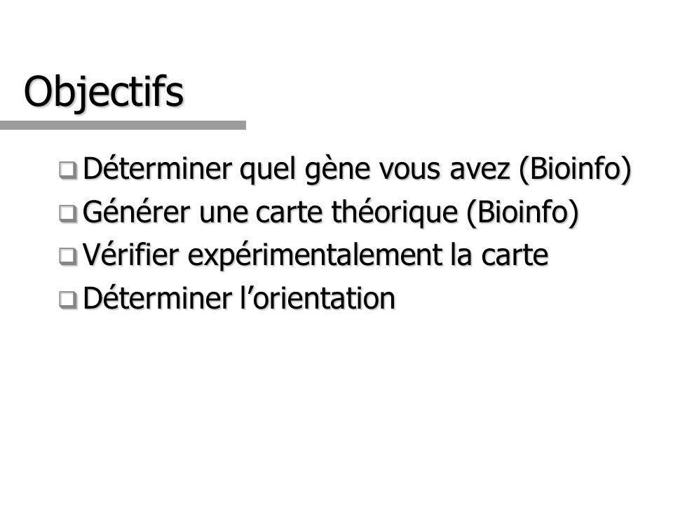 Objectifs Déterminer quel gène vous avez (Bioinfo) Déterminer quel gène vous avez (Bioinfo) Générer une carte théorique (Bioinfo) Générer une carte théorique (Bioinfo) Vérifier expérimentalement la carte Vérifier expérimentalement la carte Déterminer lorientation Déterminer lorientation