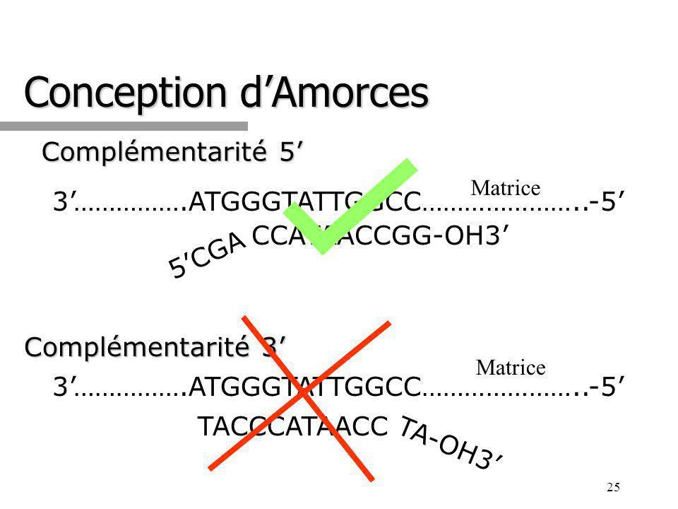 25 Conception dAmorces Complémentarité 5 3…………….ATGGGTATTGGCC…………………..-5 Matrice CCATAACCGG-OH3 5CGA Complémentarité 3 3…………….ATGGGTATTGGCC…………………..-5 Matrice TACCCATAACC TA-OH3