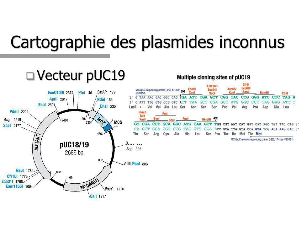 Clonage dans pUC19 X SCM Digéré avec X