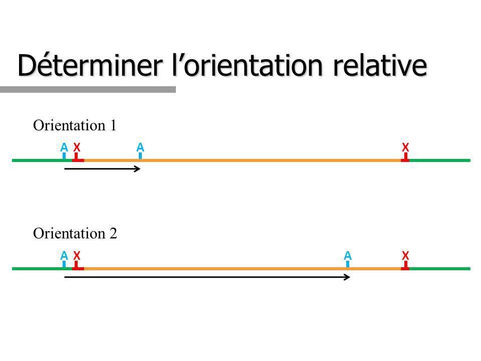 Déterminer lorientation relative XXAA XXAA Orientation 1 Orientation 2