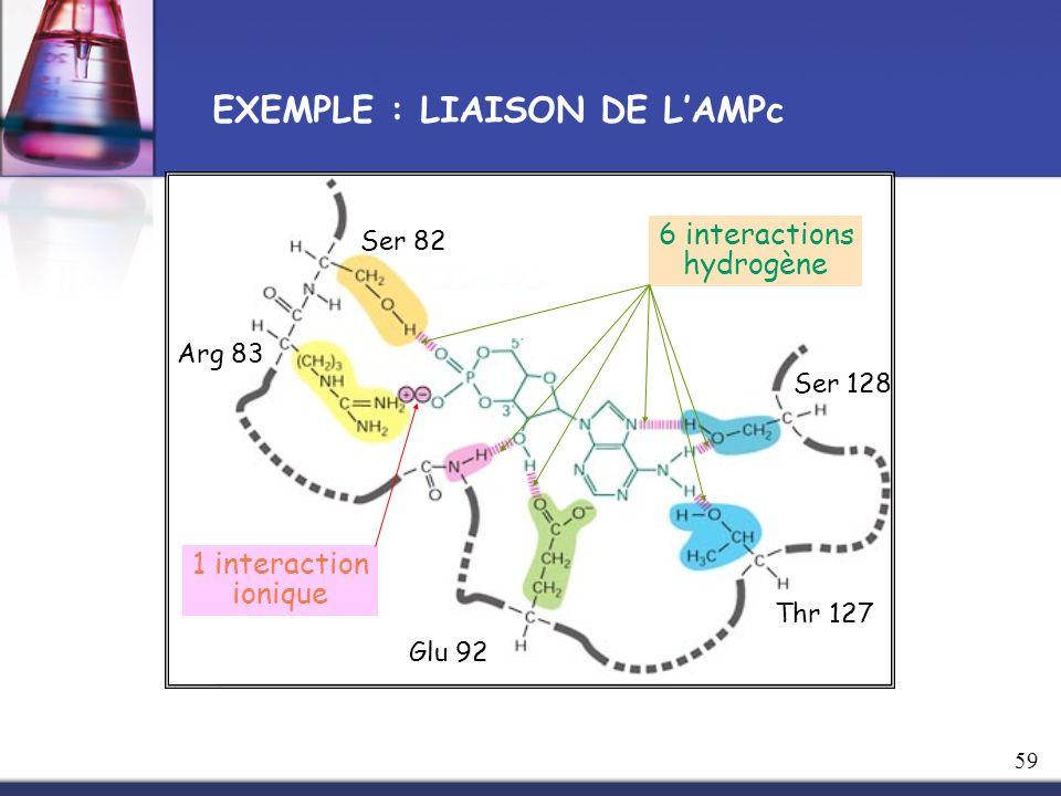 Ser 82 Arg 83 Glu 92 Thr 127 Ser 128 6 interactions hydrogène 1 interaction ionique EXEMPLE : LIAISON DE LAMPc 59