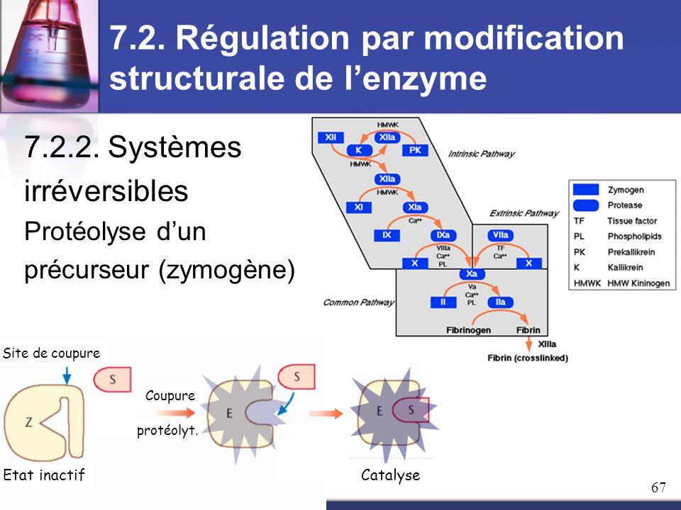 7.2. Régulation par modification structurale de lenzyme 7.2.2. Systèmes irréversibles Protéolyse dun précurseur (zymogène) Etat inactif Site de coupur