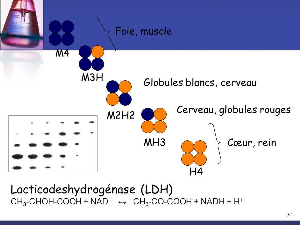M4 M3H M2H2 MH3 H4 Cœur, rein Foie, muscle Globules blancs, cerveau Cerveau, globules rouges Lacticodeshydrogénase (LDH) CH 3 -CHOH-COOH + NAD + CH 3