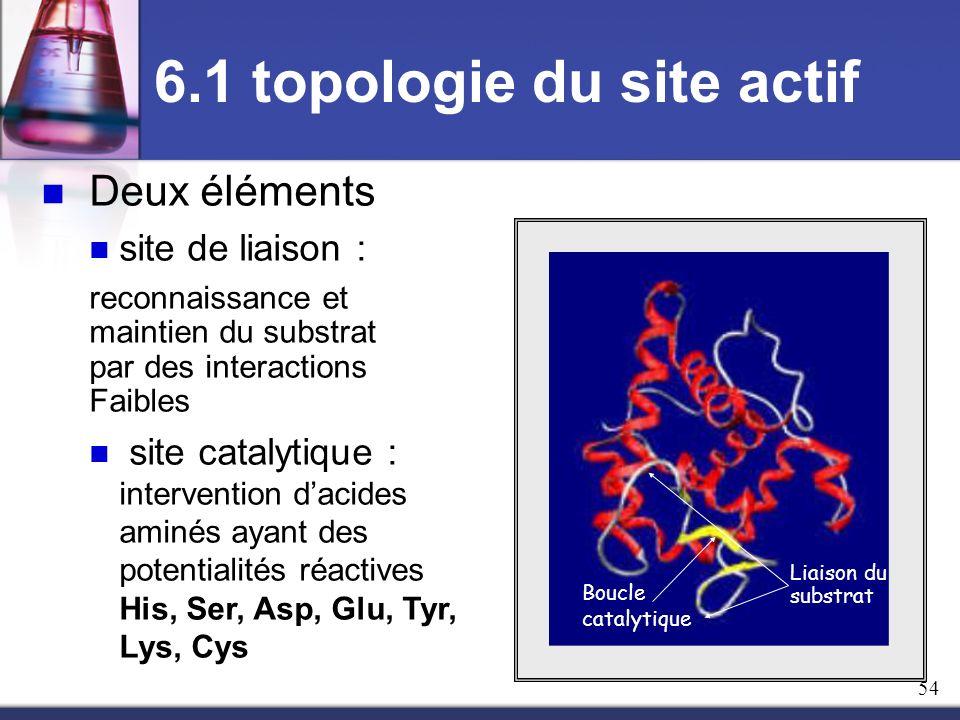 Deux éléments site de liaison : reconnaissance et maintien du substrat par des interactions Faibles site catalytique : intervention dacides aminés aya