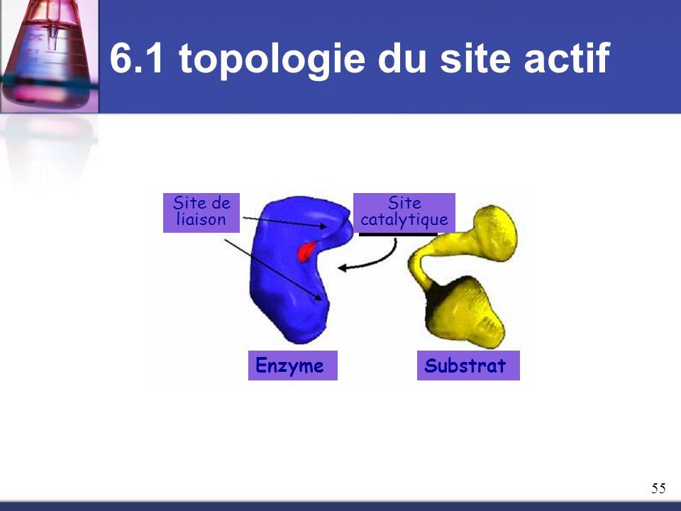 6.1 topologie du site actif Site catalytique Site de liaison EnzymeSubstrat 55