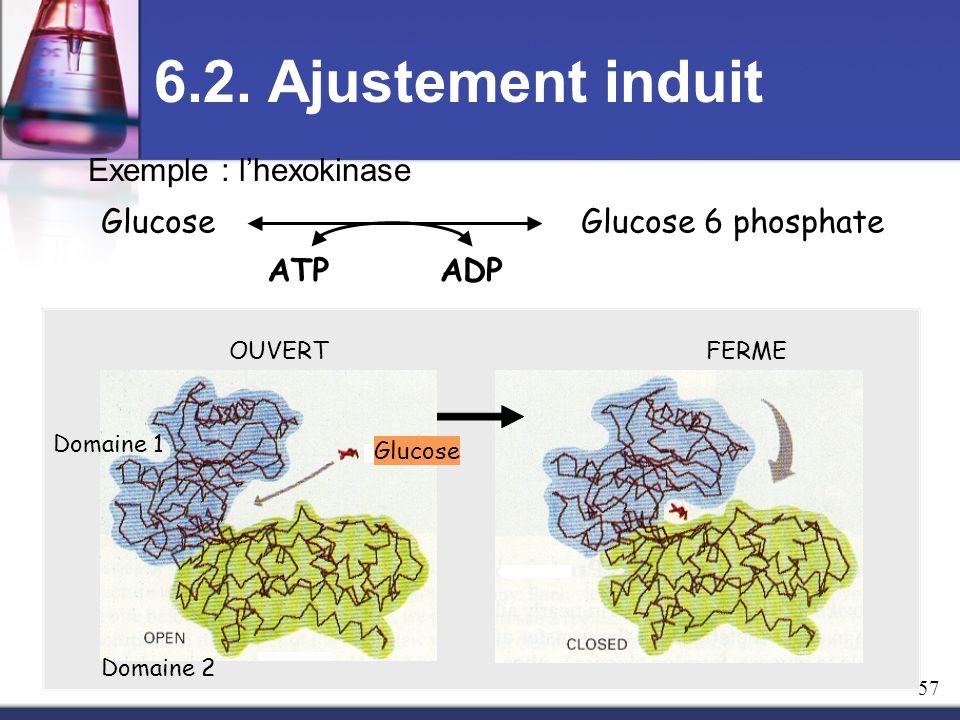 6.2. Ajustement induit ATPADP Glucose Glucose 6 phosphate Exemple : lhexokinase FERME OUVERT Domaine 1 Domaine 2 Glucose 57