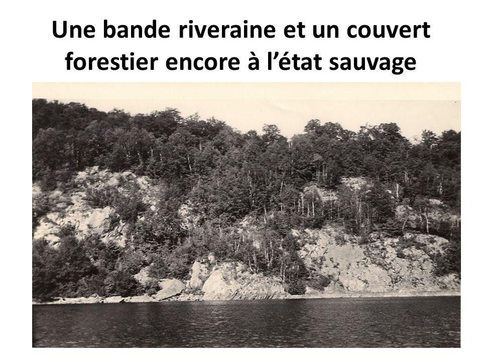 Une bande riveraine et un couvert forestier encore à létat sauvage
