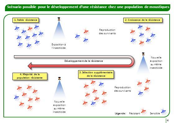 Mode daction des insecticides Les insecticides peuvent être classés par Mode dAction (MoA) selon leur site d action.