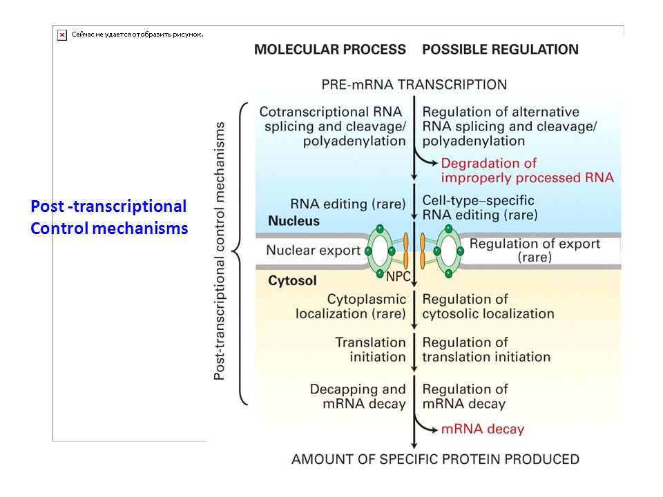 Post -transcriptional Control mechanisms