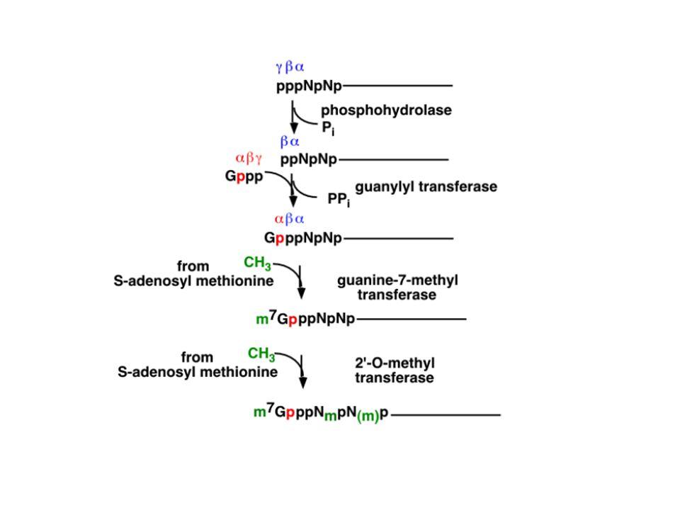 rôle de la protéine SMN dans lamyotrophie spinale La protéine SMN fait partie dun complexe ubiquitaire qui participe à lassemblage des snRNPs du spliceosome.