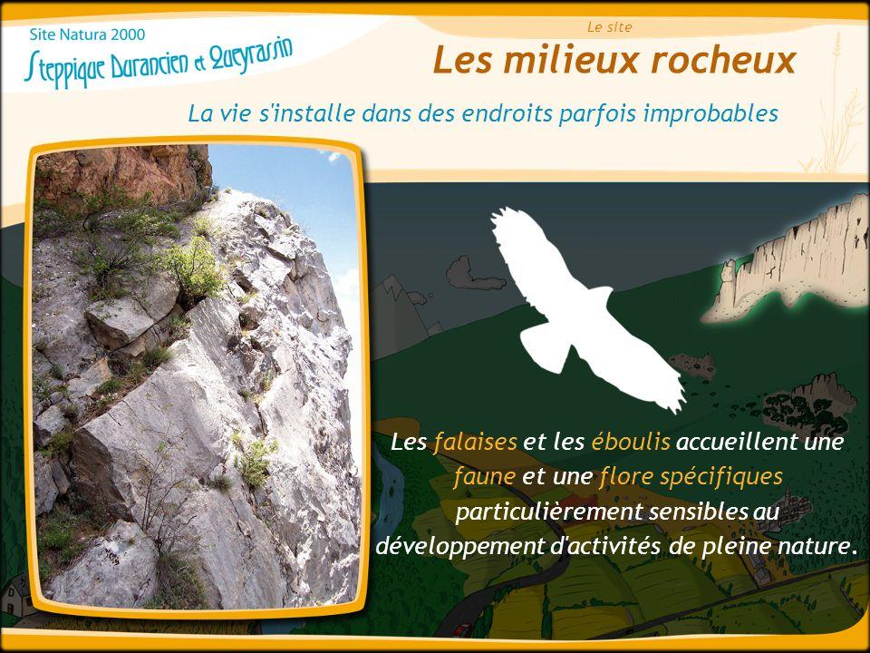 Les milieux rocheux Le site La vie s'installe dans des endroits parfois improbables Les falaises et les éboulis accueillent une faune et une flore spé