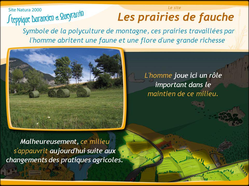 Les prairies de fauche Le site Symbole de la polyculture de montagne, ces prairies travaillées par l'homme abritent une faune et une flore d'une grand