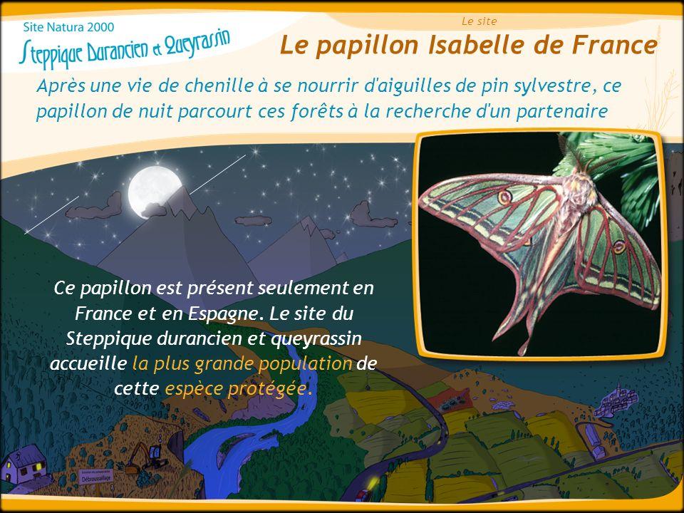 Le papillon Isabelle de France Le site Après une vie de chenille à se nourrir d'aiguilles de pin sylvestre, ce papillon de nuit parcourt ces forêts à