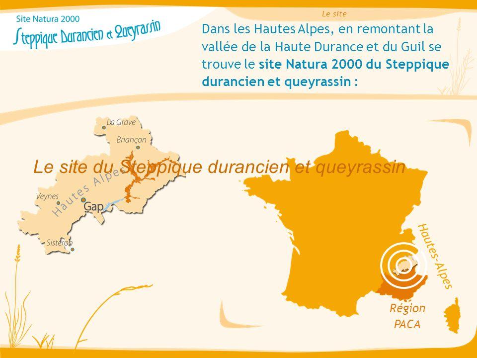 Dans les Hautes Alpes, en remontant la vallée de la Haute Durance et du Guil se trouve le site Natura 2000 du Steppique durancien et queyrassin : Régi