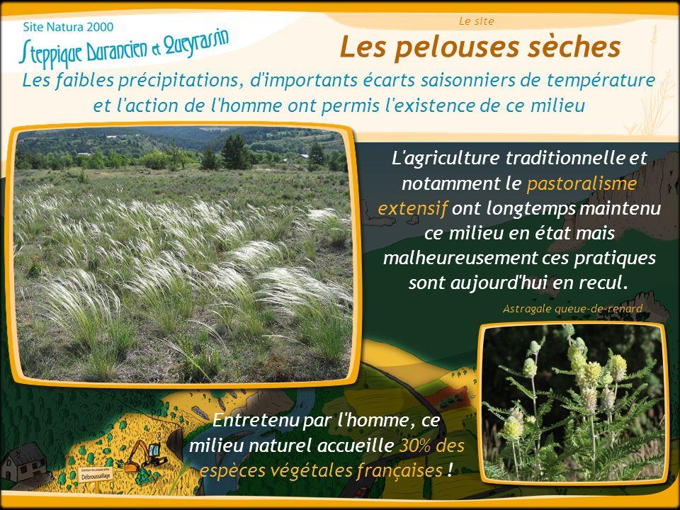 Les pelouses sèches Le site Entretenu par l'homme, ce milieu naturel accueille 30% des espèces végétales françaises ! Les faibles précipitations, d'im