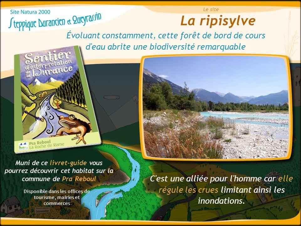 La ripisylve Le site Évoluant constamment, cette forêt de bord de cours d'eau abrite une biodiversité remarquable Muni de ce livret-guide vous pourrez