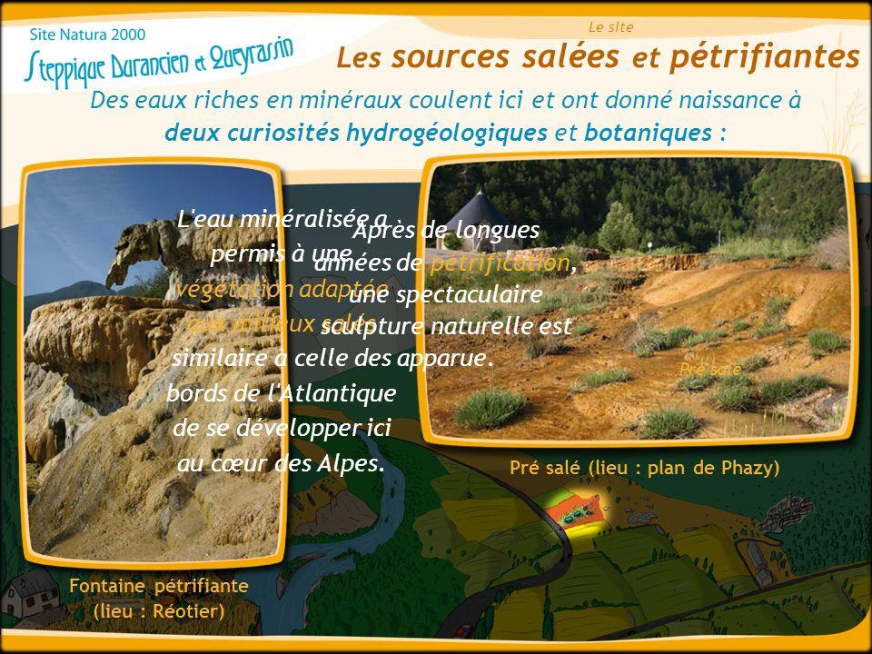 Les sources salées et pétrifiantes Le site Des eaux riches en minéraux coulent ici et ont donné naissance à deux curiosités hydrogéologiques et botani