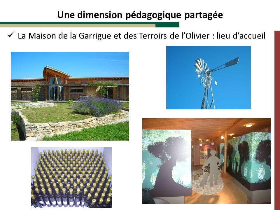 Une dimension pédagogique partagée La Maison de la Garrigue et des Terroirs de lOlivier : lieu daccueil