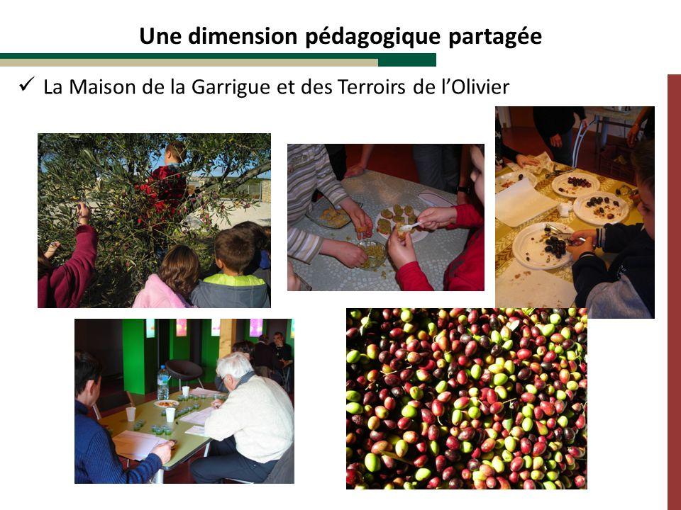 Une dimension pédagogique partagée La Maison de la Garrigue et des Terroirs de lOlivier