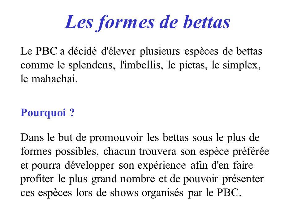 Les formes de bettas Le PBC a décidé d'élever plusieurs espèces de bettas comme le splendens, l'imbellis, le pictas, le simplex, le mahachai. Pourquoi