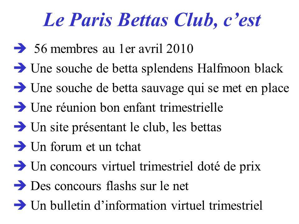 Le Paris Bettas Club, cest 56 membres au 1er avril 2010 Une souche de betta splendens Halfmoon black Une souche de betta sauvage qui se met en place U