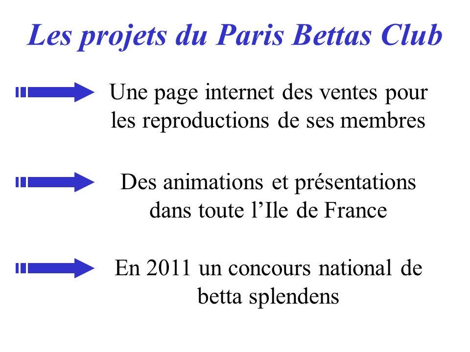 Les projets du Paris Bettas Club Une page internet des ventes pour les reproductions de ses membres Des animations et présentations dans toute lIle de
