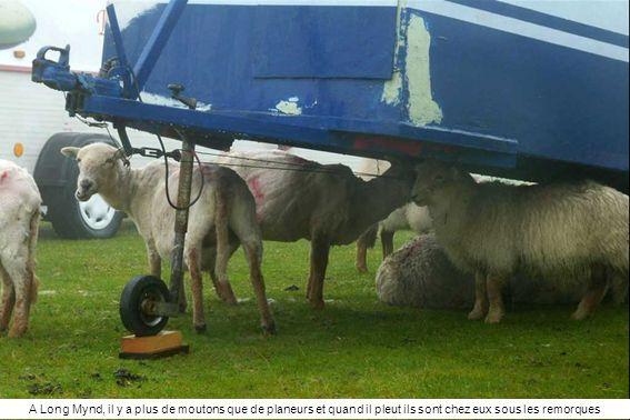 A Long Mynd, il y a plus de moutons que de planeurs et quand il pleut ils sont chez eux sous les remorques
