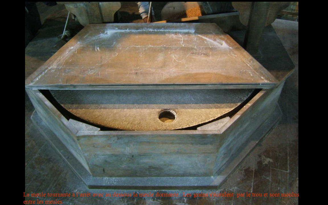La meule tournante à larrêt avec au dessous la meule dormante. Les grains s'écoulent par le trou et sont moulus entre les meules.