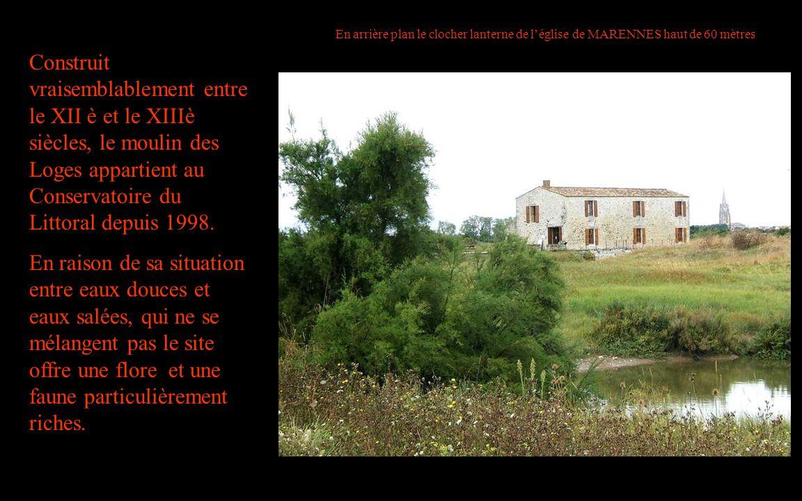 Construit vraisemblablement entre le XII è et le XIIIè siècles, le moulin des Loges appartient au Conservatoire du Littoral depuis 1998. En raison de