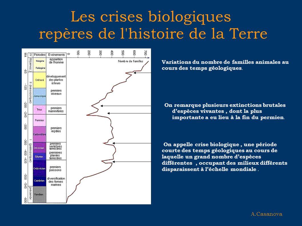 Les crises biologiques repères de l'histoire de la Terre On remarque plusieurs extinctions brutales despèces vivantes, dont la plus importante a eu li