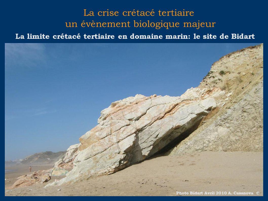 La crise crétacé tertiaire un évènement biologique majeur La limite crétacé tertiaire en domaine marin: le site de Bidart Photo Bidart Avril 2010 A. C