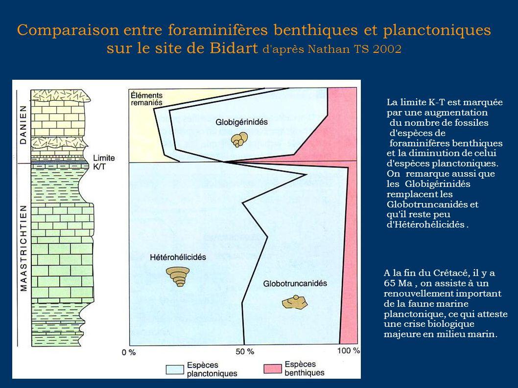 Comparaison entre foraminifères benthiques et planctoniques sur le site de Bidart d'après Nathan TS 2002 La limite K-T est marquée par une augmentatio