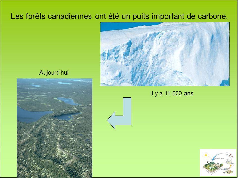 Aujourdhui Les forêts canadiennes ont été un puits important de carbone. Il y a 11 000 ans